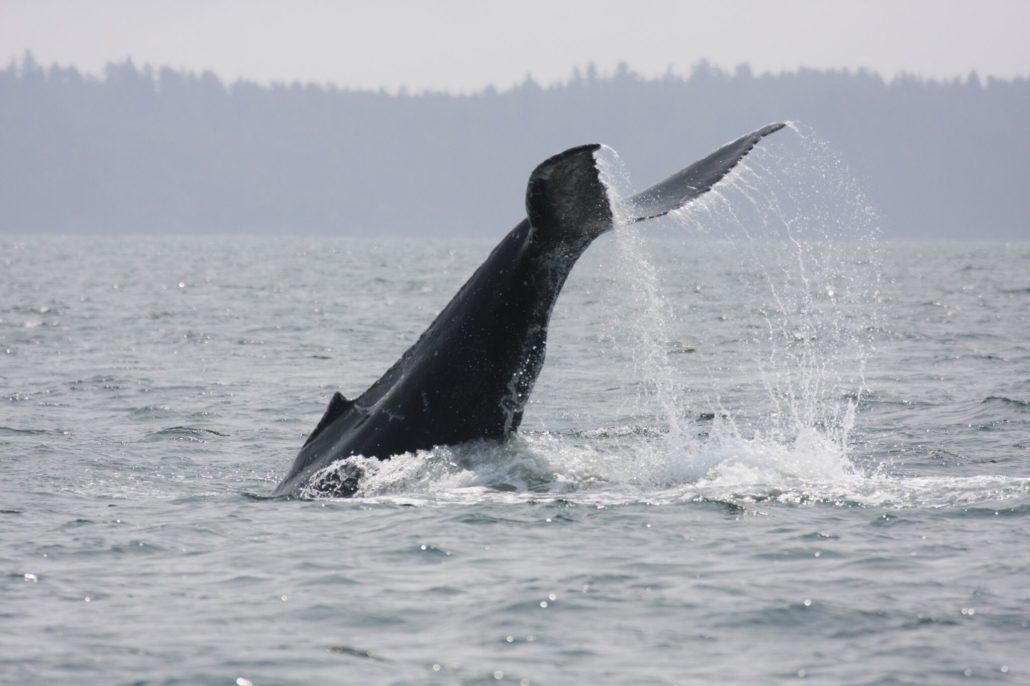 """watching whales with Outdoor Team Building Activities"""" is locked Outdoor Team Building Activities"""