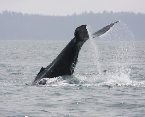 "watching whales with Outdoor Team Building Activities"" is locked Outdoor Team Building Activities"