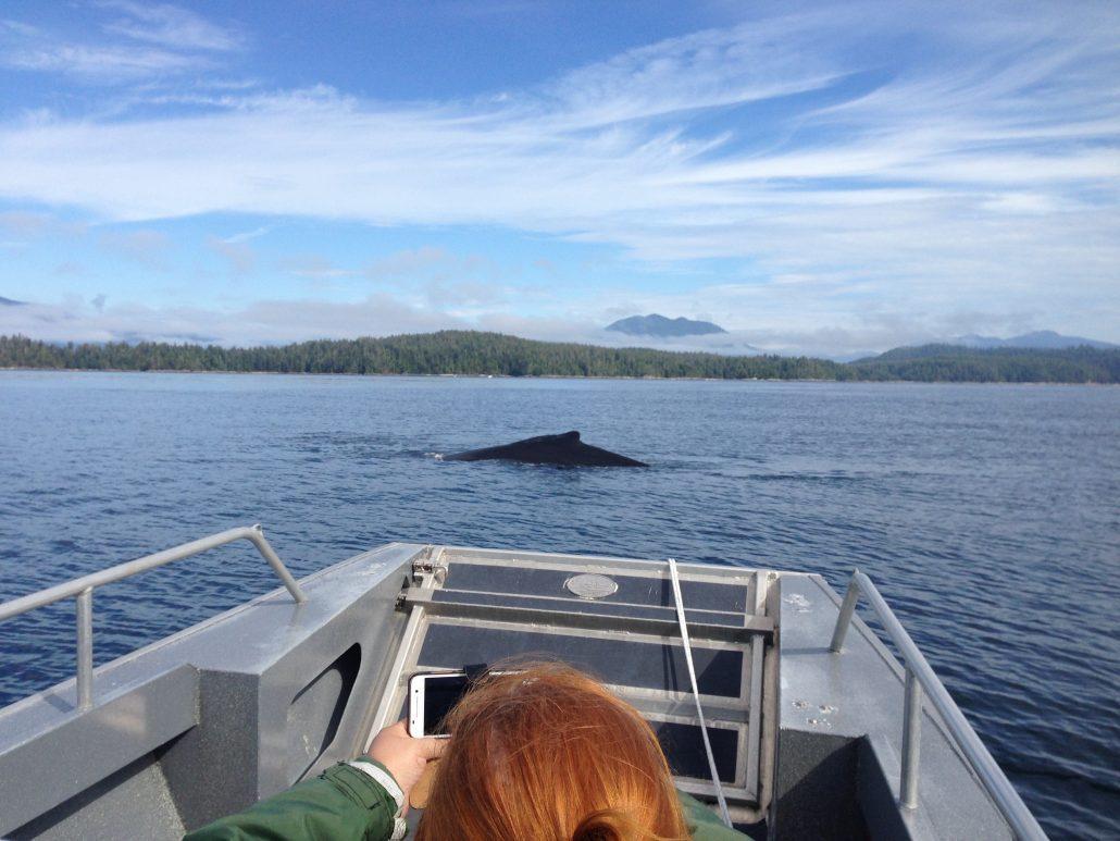 west coast wildlife viewing during fishing trip