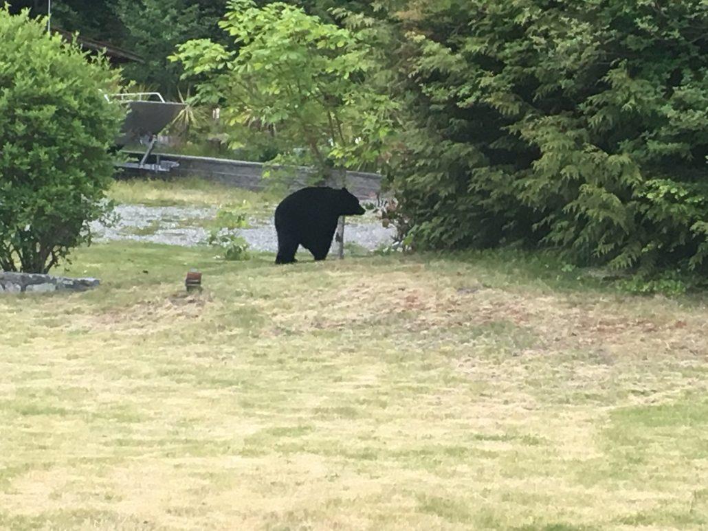 wildlife at west coast fishing lodge