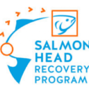 salmon head recovery program - eagle nook resort